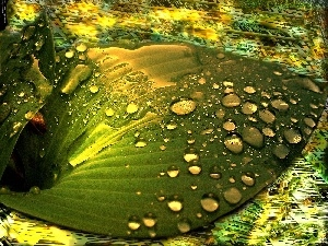 graphics, water, leaf, drops