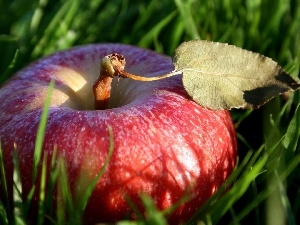 apple, grass, Red