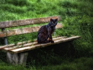 Bench, grass, cat