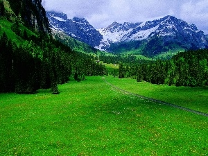 grass, coniferous, Mountains, forest