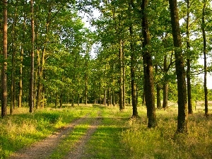grass, viewes, forest, Path, trees