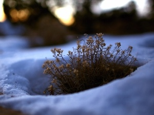 grass, Flowers, snow, dry