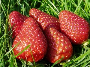 grass, strawberries