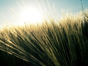 grass, rays of the Sun