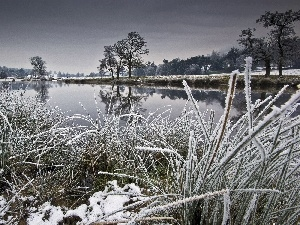 grass, viewes, River, winter, trees