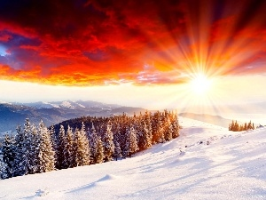 grove, sun, winter, rays
