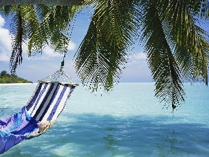 Palms, Hammock, sea