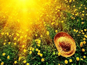 dandelions, Hat, rays of the Sun, Meadow