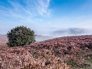 heather, trees, Mountains, autumn, Fog