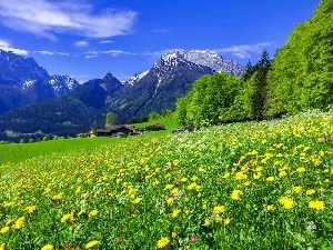 Houses, Mountains, woods, Meadow, Spring, Flowers