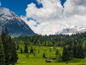 huts, Meadow, Mountains, forest