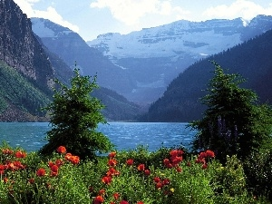 Mountains, lake, papavers