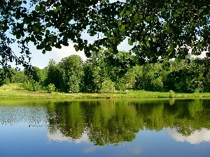 lake, viewes, grass, Park, reflection, trees