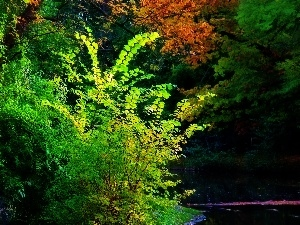lake, trees, viewes, color, summer, Leaf