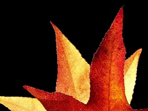 Leaf, Autumn