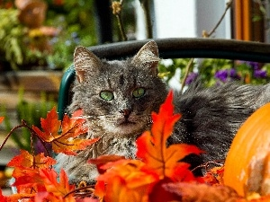 Autumn, Leaf, cat