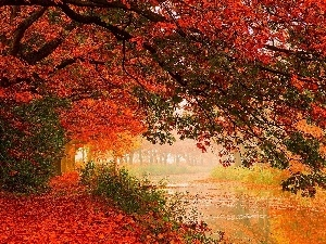 Leaf, viewes, color, River, autumn, trees