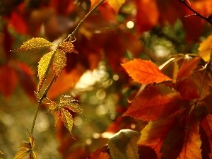 Leaf, color, wild, autumn, Wine