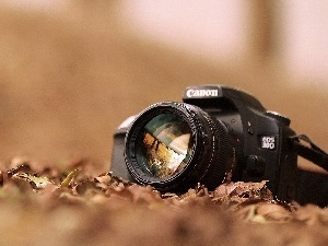 Leaf, Autumn, Camera, Canon