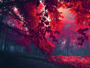 Leaf, Red, forest, Fog