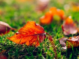 Leaf, Autumn, Meadow, grass