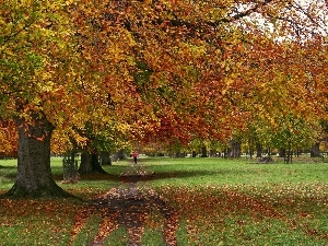 Leaf, green, Park, autumn
