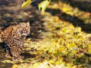Leaf, Autumn, small, Leopards