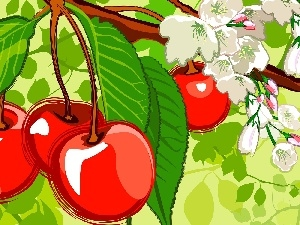 cherries, leaves, Fruits
