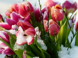 snow, leaves, Tulips