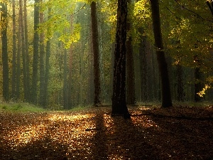 flash, ligh, luminosity, sun, forest, Leaf, autumn, Przebijaj?ce