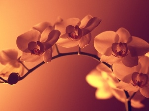 light, shadow, orchids, twig
