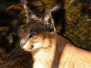 light breaking through sky, Caracal