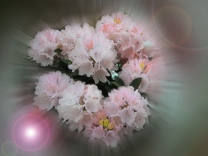 light pink, flowers, small bunch