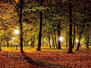 Park, lighting, Autumn