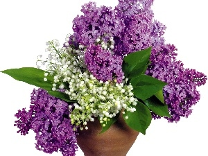 Lilacs, purple, bouquet, white