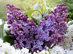 Lilacs, bouquet