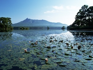 lilies, viewes, water, mountains, water, trees