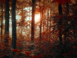 autumn, luminosity, flash, Przebijaj?ce, forest, ligh, sun