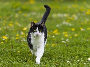 Meadow, cat