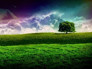 Meadow, trees, clouds, grass, lonely