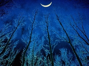 moon, viewes, Night, trees