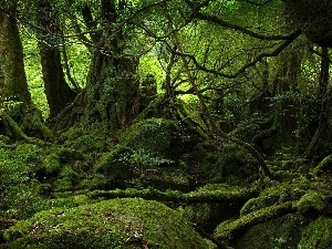 forest, Moss, forest