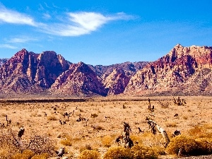 Mountains, Desert