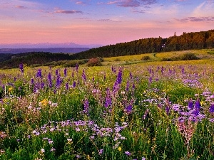 Mountains, Flowers, Meadow, woods, color