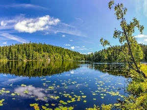 forest, Norway, lake
