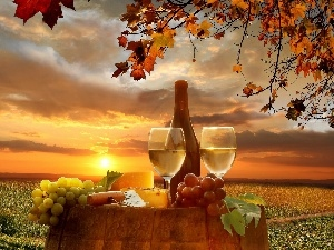 west, oak, sun, field, Grape, Wine, autumn, barrel