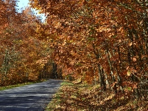 oak, autumn, road, Forest, ##
