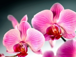 orchid, Colourfull Flowers, orchid