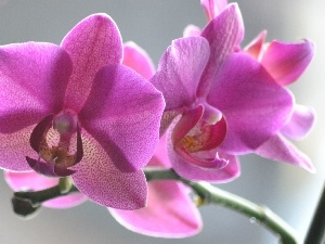 orchid, twig