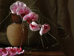 Vase, orchids, Brown
